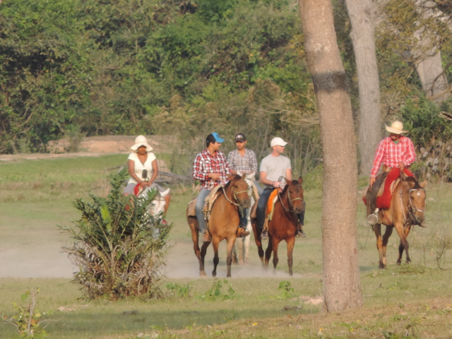 cavalgada, pantanal, passeio, piuval