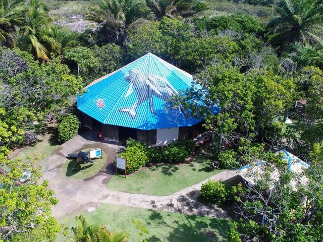 Imagem: Instituto Baleia Jubarte | Praia do Forte BA Brasil