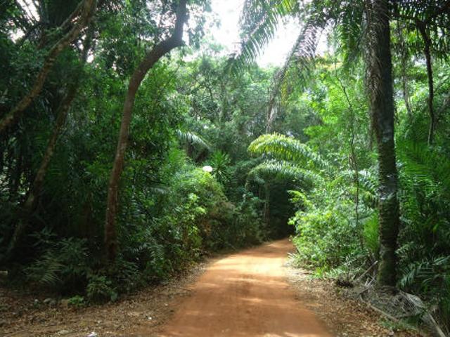 Trilha Ecológica Reserva da Sapiranga - Praia do Forte