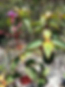 Flora diversificada pelo caminho